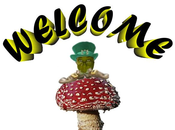 WELCOME Lepracaun red mushroom.jpg