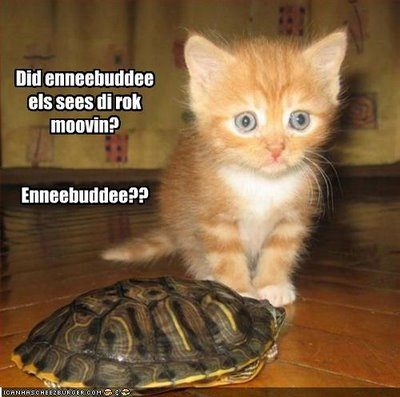 cute kitten with turtle for worthy thread.jpg